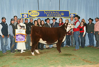 Online Sales | Buck Cattle Co